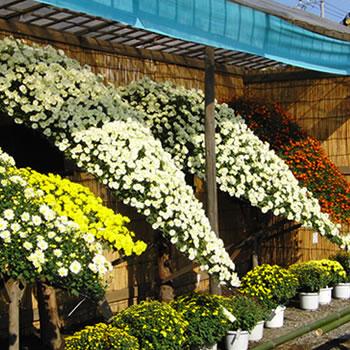 cities gardena florists kiku florist gifts