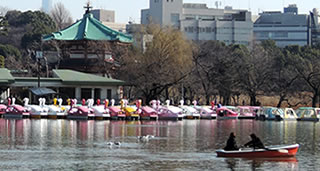 Shinobazu Pond, Ueno